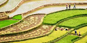 Voyagez dans le nord du Vietnam