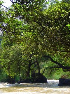 arbre et rivière.