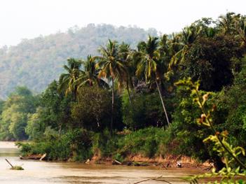rivière et cocotiers.
