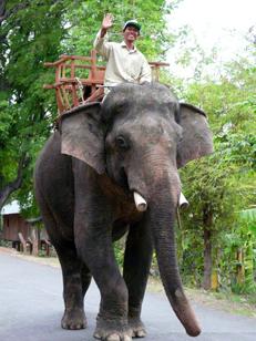 conducteur éléphant.