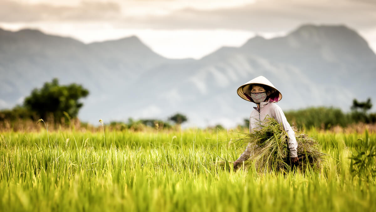 femme travaillant dans les rizières.
