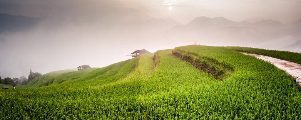Rizières dans les montagnes du Nord du Vietnam.