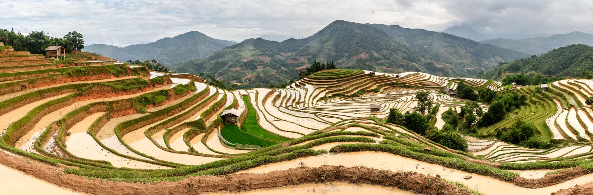 rizières en terrasse de Hoang Su Phi.