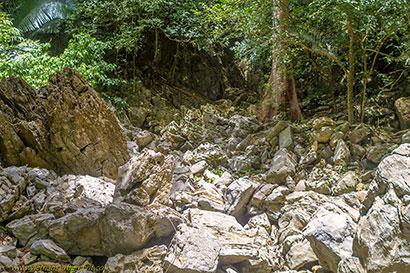 rochers arbre.