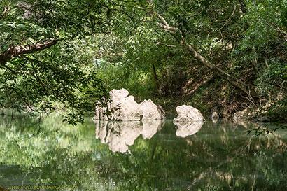 rivière forêt.
