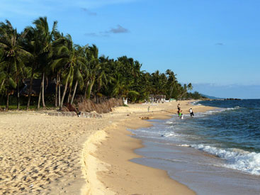 plage et cocotiers.