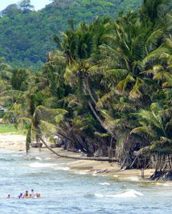 mer et cocotiers.