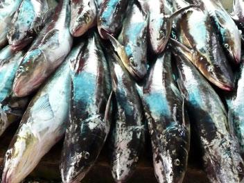 étalage de poissons sur un marché au Vietnam.