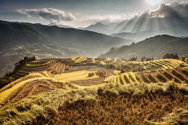 rizières en terrasse et montagnes.