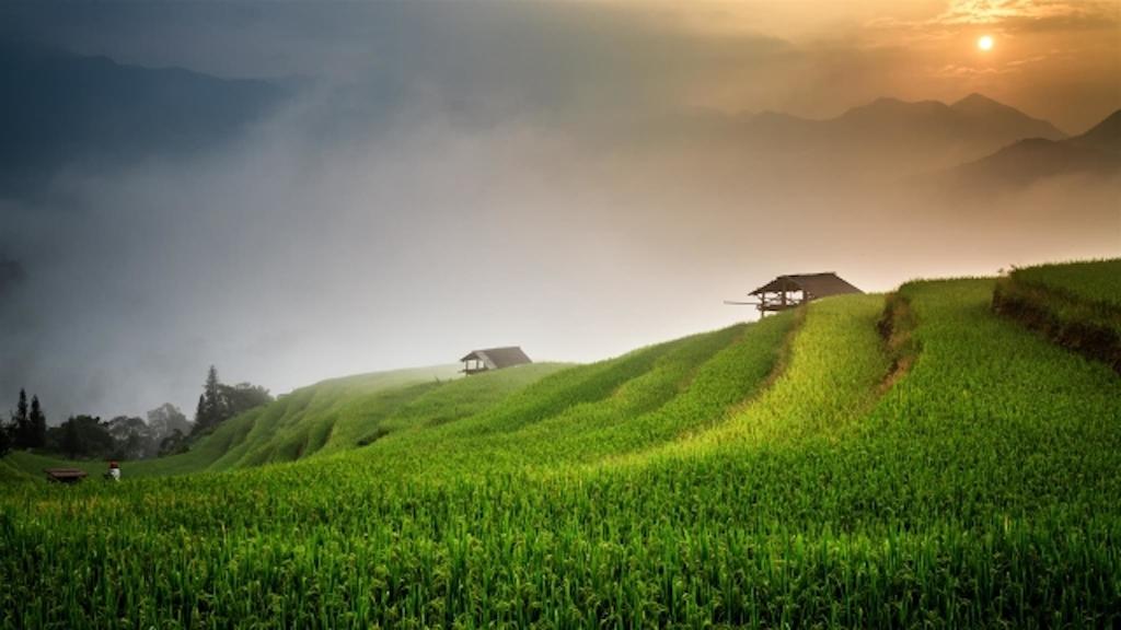 Rizière au Vietnam.