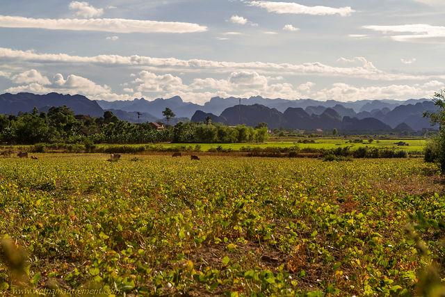 Phong Nha au Vietnam.