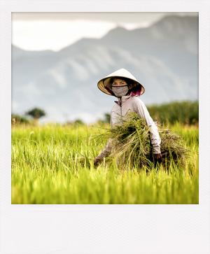 À la découverte de l'histoire du Vietnam