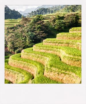 Voyage de noces et escapade romantique au Vietnam.