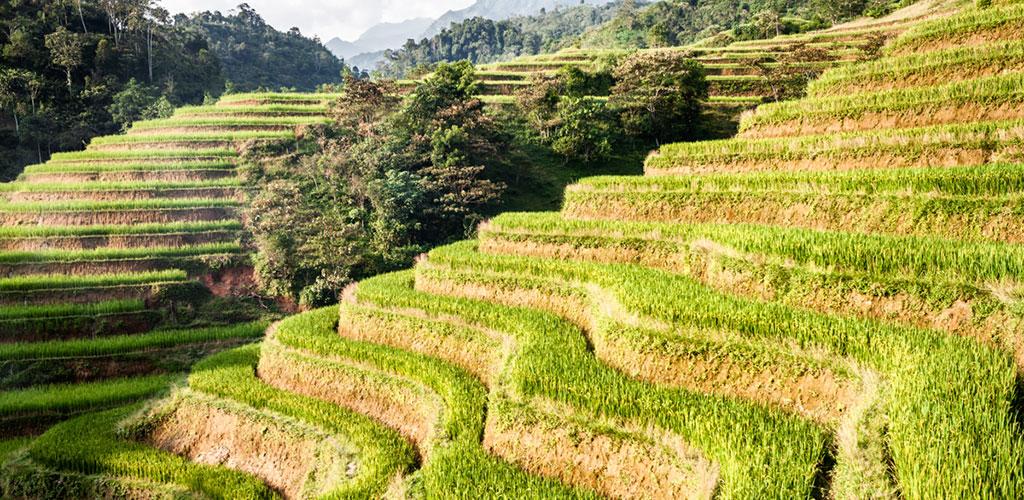 Rizières du Haut Tonkin au Vietnam.