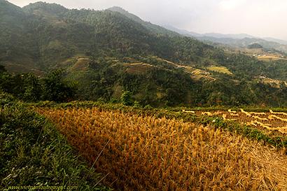 montagnes et rizières.