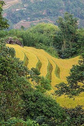 vue rizières en terrasse.