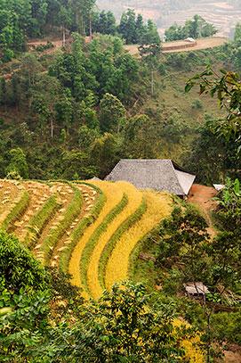 maison au milieu des rizières en terrasse.