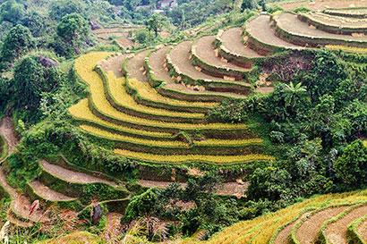 rizières en terrasse.